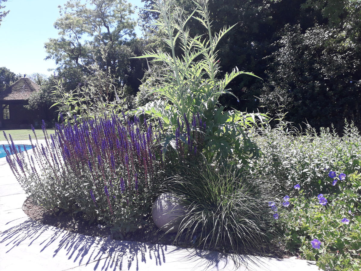 Planting-9-cottage-planting-quercus-gard