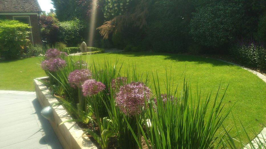 Planting-6-alliums-grasses-quercus-garde
