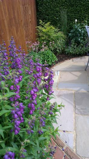 Modern-cottage-garden-6-quercus-garden-d