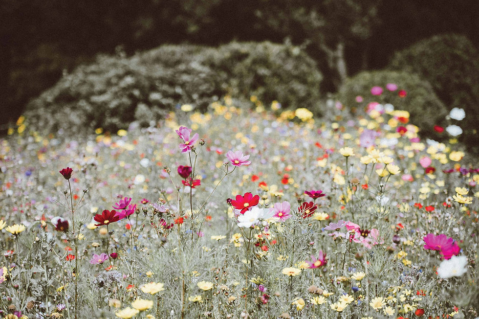 The-Garden-Whisperer.jpg