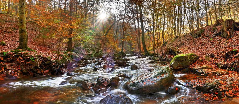 Der Harz: Mehr als Sauermilchkäse und Räucherwurst