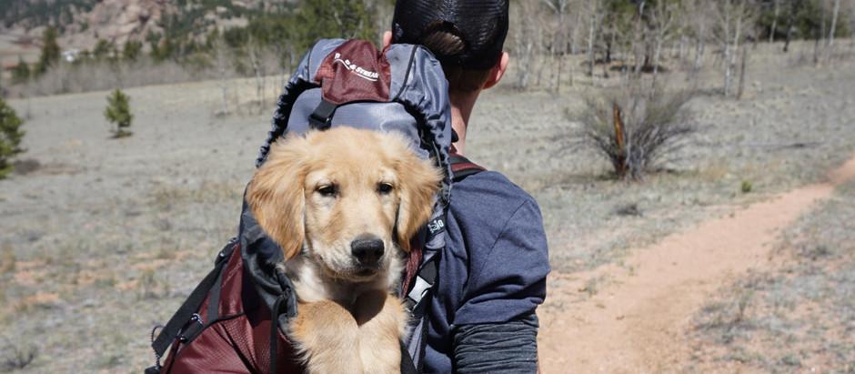 Mit Hund oder Katze in den Urlaub fahren – was sind die Vor- und Nachteile
