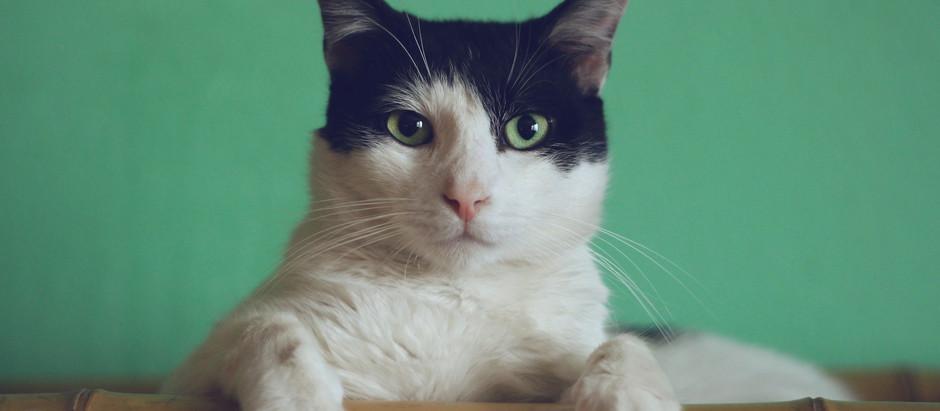 Urlaub ohne meine Katze – ein Profikatzenpfleger kümmert sich um deine Mieze