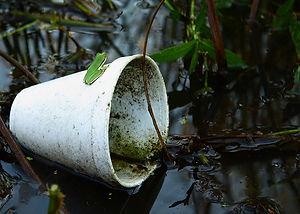 foam-cups-water-pollution.jpg