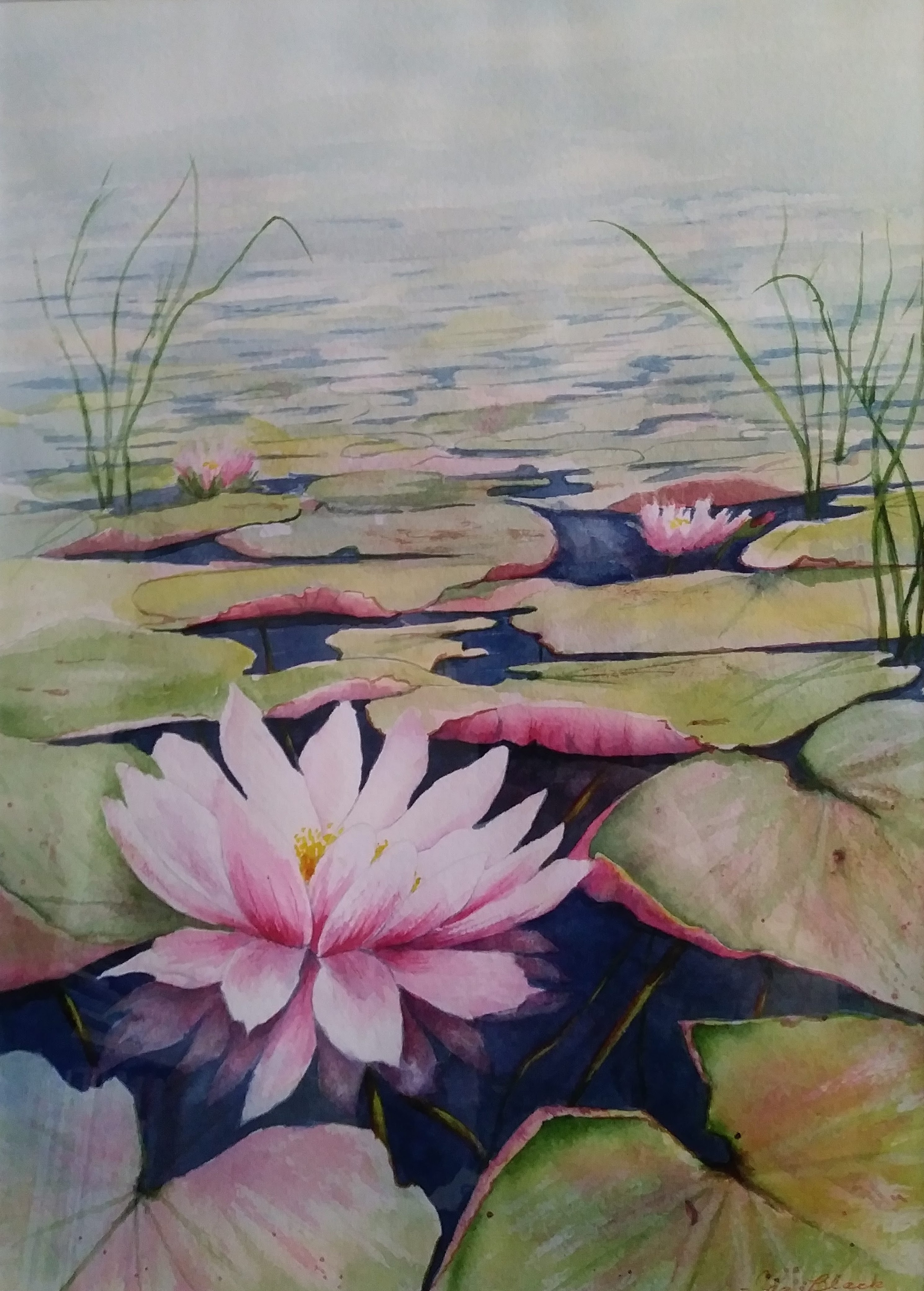 Waterlily by IBlack300