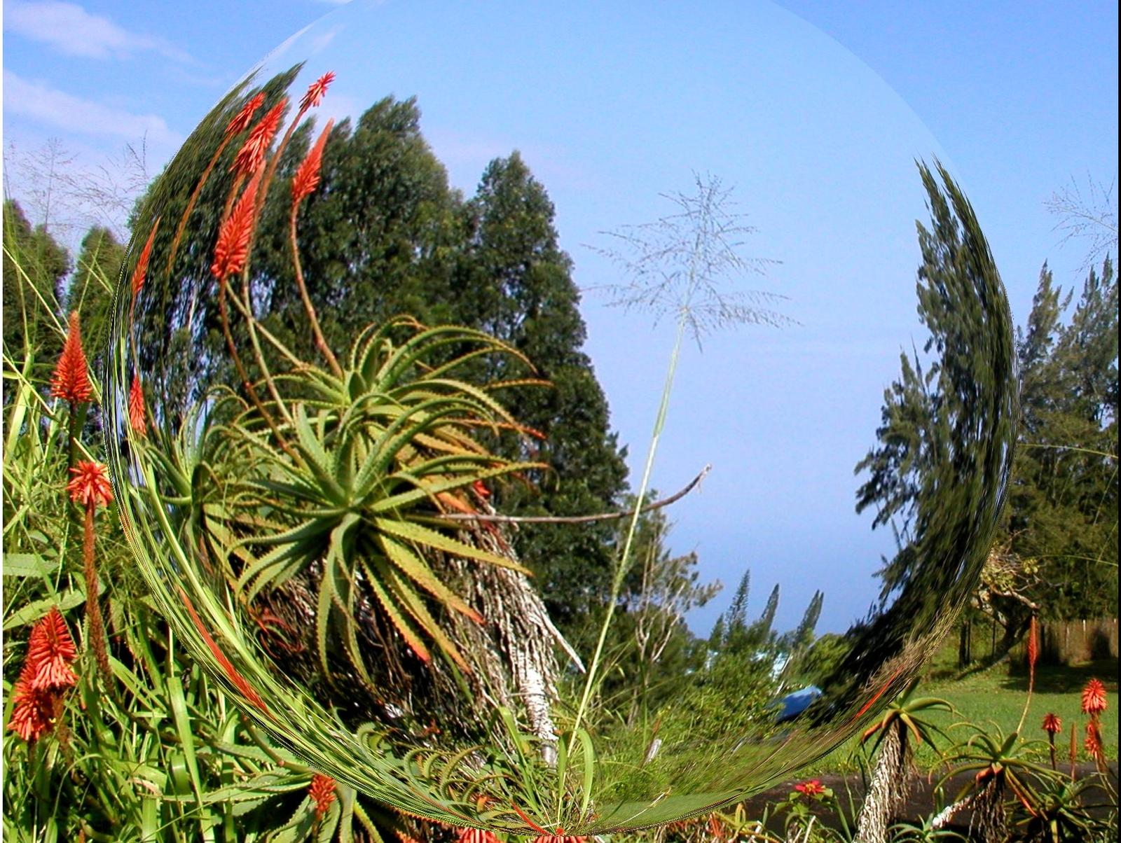 Fruits-Plants (1).jpg