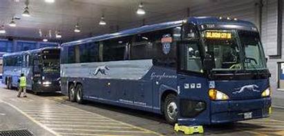 greyhound buses.jpeg