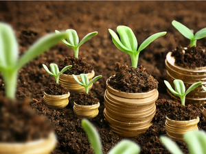 Coins in soil with young plants. Money growth concept. Increase Your Profits