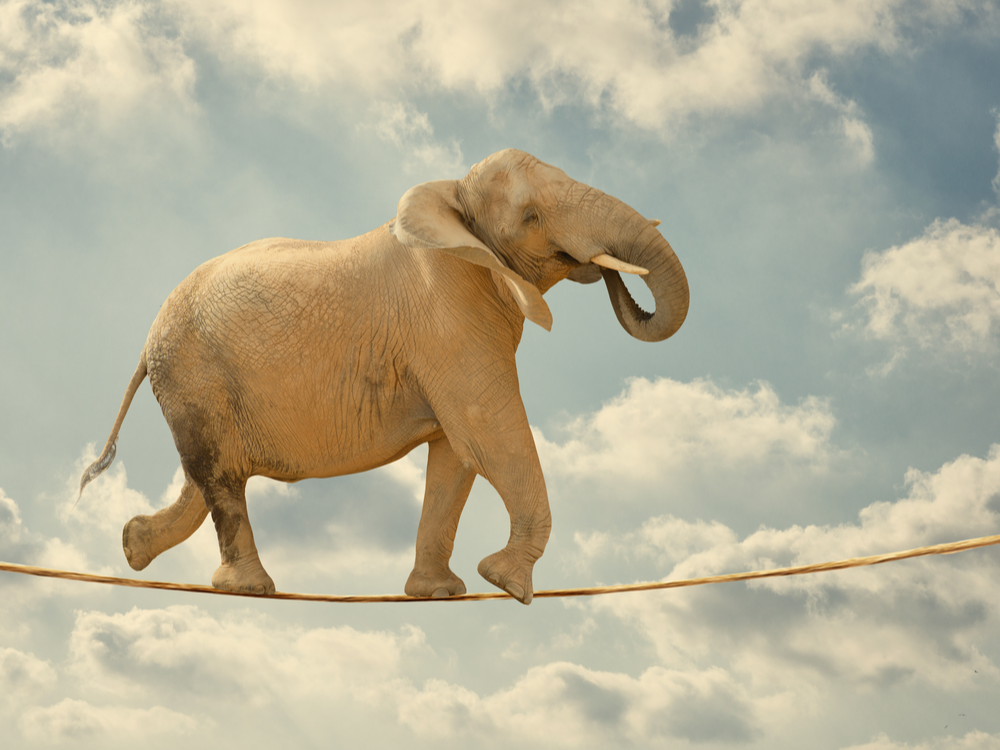 Elephant In Sky Walking On Rope | Social Insights