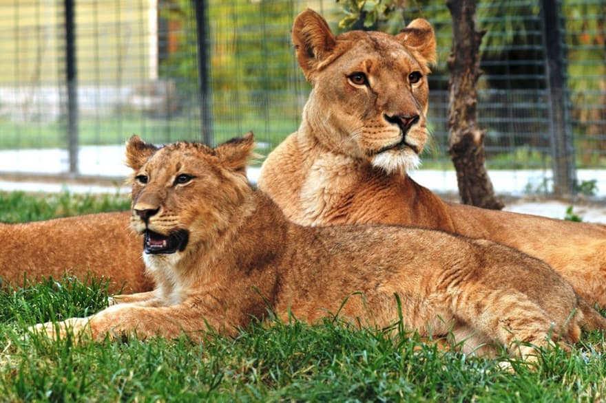 Darica Zoo