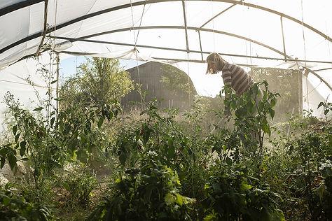 Cabaneàplantes-3-5.jpg