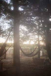 Cabaneàplantes-1.jpg