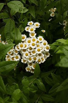 Jardindelaforet-46.jpg