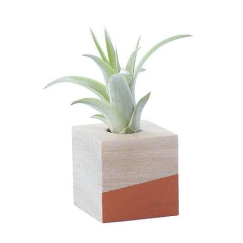 Air Plant Cube Magnet