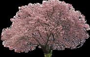 sa163カワヅザクラ_Japanese-cherry.png