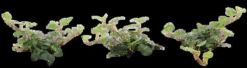 plants001.png