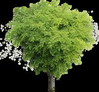 鳥瞰樹木ケヤキBirds-eye-Zelkova