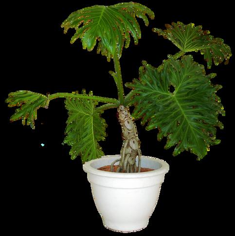 plants002.png