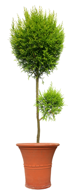 plants005.png