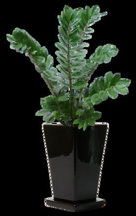 plants003.png