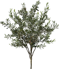 3t_09オリーブ_Olive-ree.png