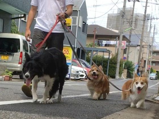 【ペットのア・ソ・ビ・バ】お散歩.jpg
