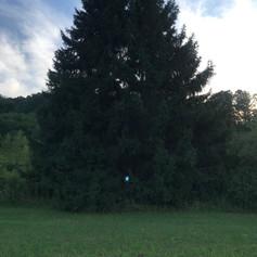 Two trees Portal
