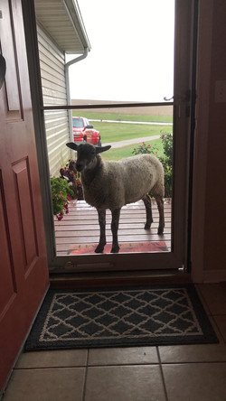 """Ernest, """"can I come in mom?"""""""
