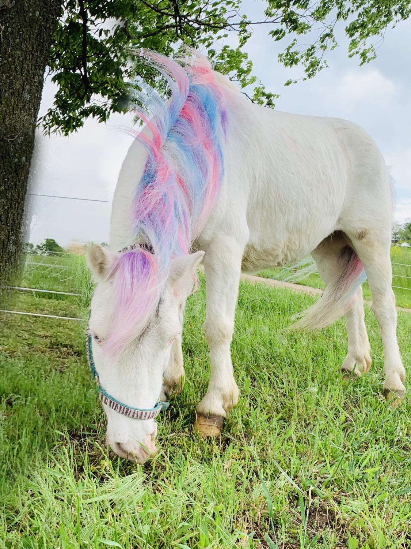 Unicorn Sprite