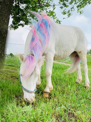 Unicorn Appearance