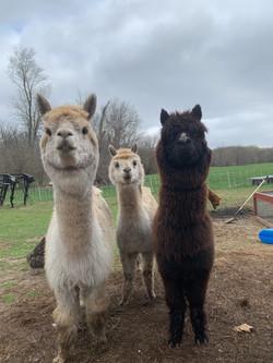Cassandra, Cassidy and Sheba