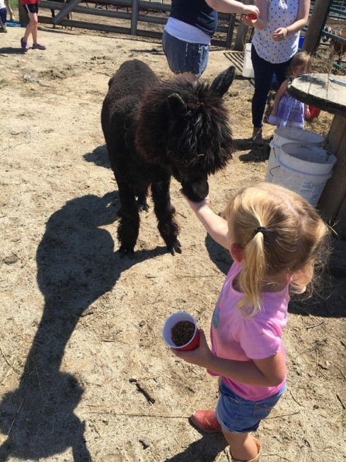 Petting Zoo at a Party