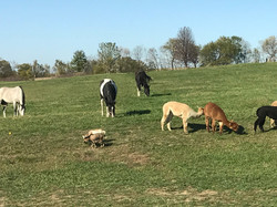 Pasture Time