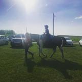 Horse Rides at a Party