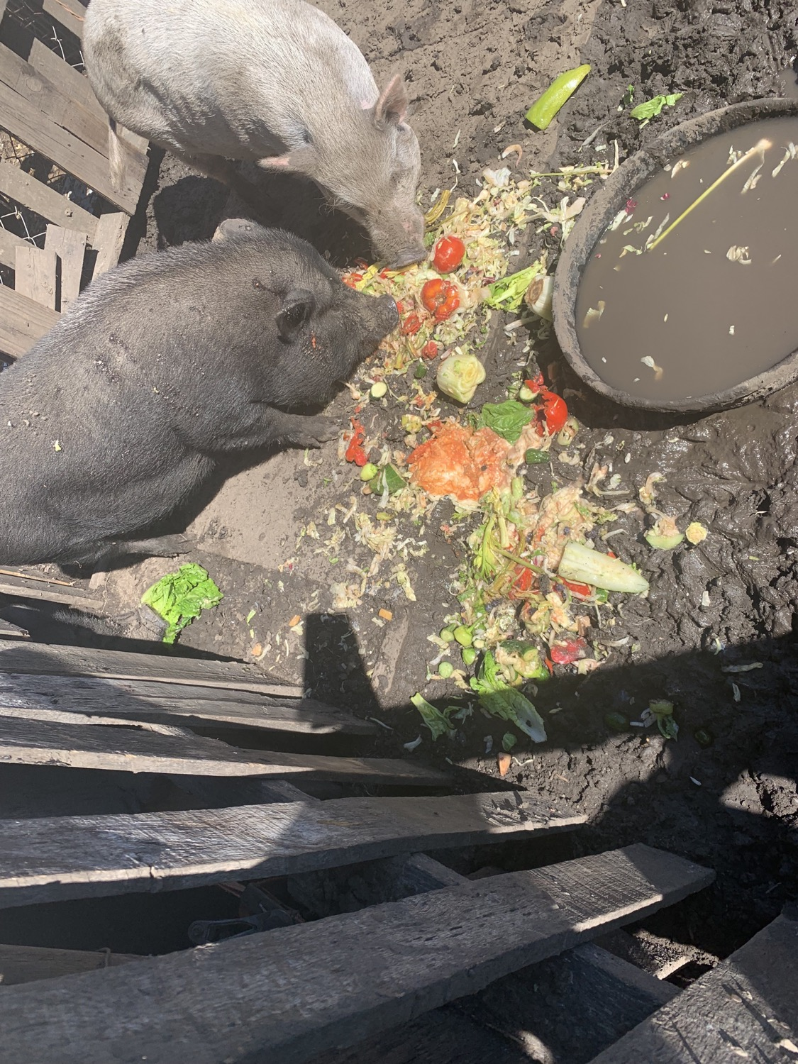 Chow Time