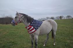 Tilly-Veterans Day