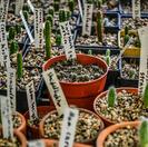 Vivero de cactus
