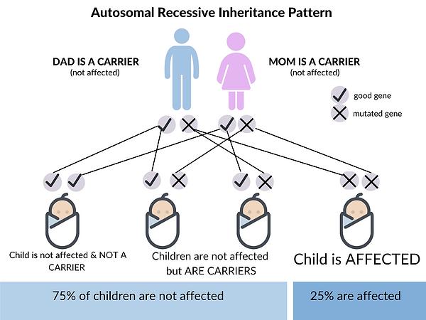 autosomal recessive chart.png