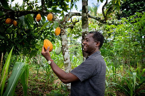 Successful african businessman looks satisfied at a cocoa bean from his plantation. _.jpg