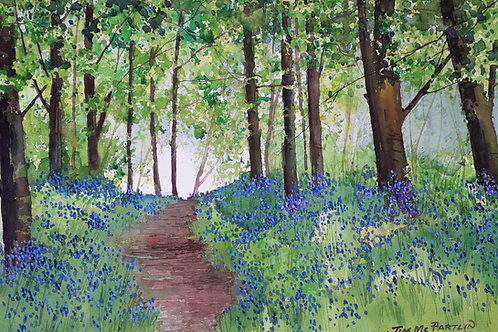 In the Bluebell Wood SOLD