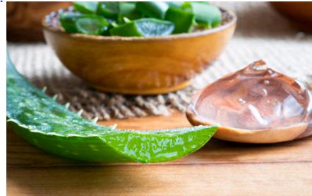 L'aloe vera pour soulager le psoriasis