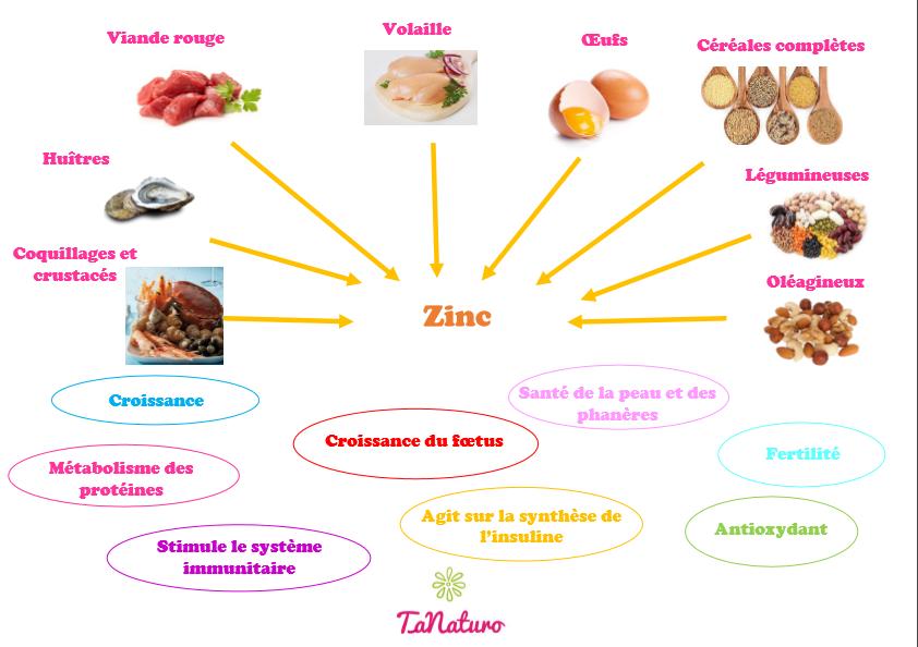 Sources et rôle du zinc