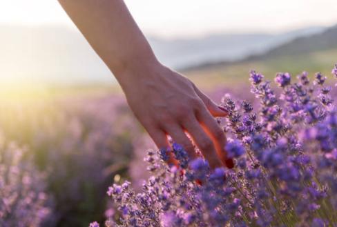Devenir naturopathe en reconversion professionnelle