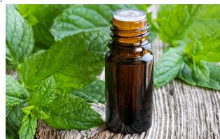 L'huile essentielle de menthe poivrée contre la gueule de bois