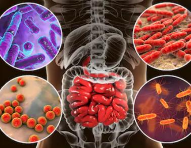 Qu'est ce que le microbiote intestinal ?