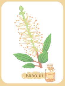 Huile essentielle de niaouli contre le rhume