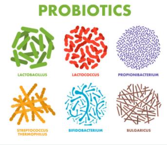 Probiotiques, prébiotiques symbiotiques quelles différences ?