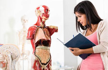 Pourquoi la maîtrise de l'anatomie physiologie est indispensable pour les étudiants naturopathes