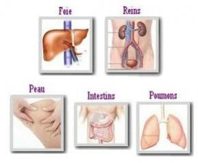Rôle des organes émonctoires