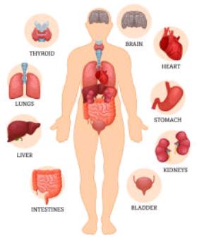 Psoriasis l'encrassement de l'organisme